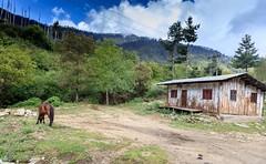 107A1330 (Tarun Chopra) Tags: bhutan canoneos5dsr gangsofduster