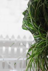 Double exposure (Sara García.) Tags: double exposure amazing edit photography photo picture photoshop photographer portrait retrato doble exposicion nature naturaleza andalucia l lovely nice follow world manipulation spring place flowers spain seville sevilla imagination eos canon colorful colours españa europa europe