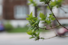 Reaching for Spring... (MomOfJasAndTam) Tags: spring bud buds budding grow growing plant branch branches leaf leaves house window windows dof depthoffield