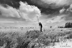 Argungu Rice Fields (Irene Becker) Tags: africa arewa argungu imagesofnigeria kebbistate landscape nigeria nigerianimages nigerianphotos northnigeria westafrica northernnigeria ricefields kebbi