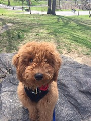 Ruby Red and Chewy's adorable boy Tucker!