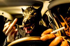 LE LOUP CHASSE LA NUIT (nARCOTO) Tags: wolf