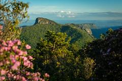 Table Rock and Shortoff Mountain (_THphotography_) Tags: backpacking blueridgemountains hawksbillmountain linvillegorge mountains northcarolina outdoor rhododendron shortoffmountain spring tablerock
