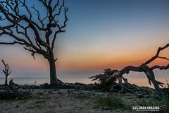 Thirty Minutes Before Sunrise (The Suss-Man (Mike)) Tags: atlanticocean beach driftwood driftwoodbeach georgia glynncounty jekyllisland nature ocean sky sonyilca77m2 sunrise sussmanimaging thesussman tree water