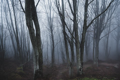 Woodland (Nick Panagou) Tags: bestshotoftheday bestphotographer contrast creative dramatic dark forest flickrnature field tree trees thessaly thelook mtpilion mtpelion greece greatphotographers path misty mist perspective create compossition exposure explore exploring green expressive eos emotion hill mountains flickrsbest flickrbest flickrinteresting landscape light longexposure outdoor