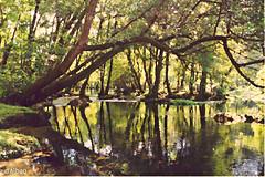 Río Avia (Franco D´Albao) Tags: francodalbao dalbao cosinac1 35mm ríoavia leiro ourense galicia paisaje landscape río river agua water bosque wood