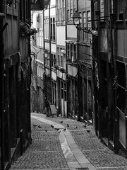 Porto - Portugal (Francisco (PortoPortugal)) Tags: 1092017 20161022fpbo4286 centrohistórico historicalcentre unescoworldheritagesite pb nb bw monochrome rua street porto portugal portografiaassociaçãofotográficadoporto franciscooliveira