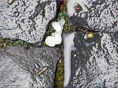 Eiskugeln - ice balls (Jorbasa) Tags: jorbasa hessen wetterau germany deutschland eis ice kugel ball eiskugel iceball regen rain gewitter thunderstorm storm wind pflaster pavingstone pflastersteine