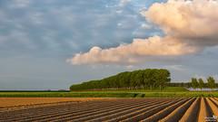 Lines, Clouds and Trees (BraCom (Bram)) Tags: bracom landscape landschap cloud wolk trees bomen gerst barley aardappelveld potatofield rural landelijk evenign avond stellendam goereeoverflakkee zuidholland nederland southholland netherlands holland canoneos5dmkiii widescreen canon 169 canonef24105mm bramvanbroekhoven nl