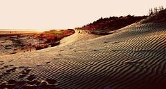 日漸流失的沙灘  Gradually lost the Sand Beach (葉 正道 Ben(busy)) Tags: taichung daanˍdistrict sandyˍbeach 沙灘 台中 大安區 纹理 taiwan sunset sandˍbeach sand beach textures sandˍripples 砂紋 海灘 大安濱海樂園 沙丘 dune 夕陽 黃昏 landscape 風景 curve 曲線 自然 nature 日落