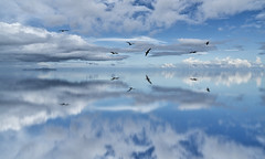Dream Reflection (DROSAN DEM) Tags: compo composition ps reflection reflejo water agua cielo sky bird aves pajaros nubes cloud