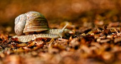 Macro Mondays - Into the woods #Explored 16-5-2017 (frankvanroon) Tags: macromondays intothewoods snail dof animal hmm mm macro depthoffield