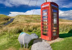 Phone home. (bainebiker) Tags: sheep abergwesynpass redphonebox hills grassland canonef24mmf14liiusm sky clouds abergwesyn dyfed walesuk