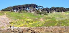 DSC_0286 (rachidH) Tags: scapes views pacific ocean sealrocks cliffhouse sutro baths tide lowtide lobos pointlobos oceanbeach sanfrancisco sf sanfran california rachidh nature
