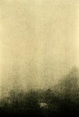 Scirocco (p1r0 (Ludovico Poggioli)) Tags: bw darkroom wetprint lith moersch easylith adox fineprint vc scirocco horse mist