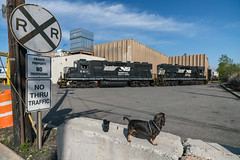 Two Geeps and a Pup (sullivan1985) Tags: train railroad railway freight freighttrain norfolksouthern ns gp382 ns5611 ns5614 h81 local locomotive locomotives emd rebuild reddyraw woodridge nj newjersey bergencounty dachshund borys dog pup geep geeps sign signs lens ziess sony