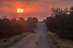 Sunrise - Kruger NP - South Africa (bart coessens) Tags: sunrise sun orpen southafrica southafricannationalparks southernafrica safari sanp sanparks africa landscape landscapes gamedrive nature