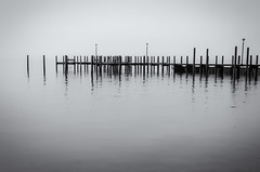 """""""The Floating Pier"""" (Photography by Sharon Farrell) Tags: pier dock havredegrace havredegracemaryland havredegracemd easternseaboard atlanticseaboard susquehannariver chesapeakebay fishingpier monochrome blackandwhite noiretblanc noiretblance reflections waterreflections ngg"""