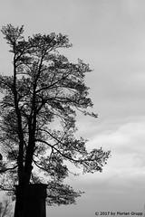 I_B_IMG_4638 (florian_grupp) Tags: burghohenzollern hohenzollern zollernalb schwäbischealb germany deutschland badenwürttemberg preussen castle historic gothic neogothic hill silhouette medieval