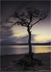 Lonely Millarochy Tree (karlpage) Tags: dusk sunset reflection lake scotland littlestopper leefilters longexposure water tree lonelytree millarochy lochlomond