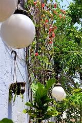White Balls (LarryJay99 ) Tags: southfloridasky patio queenofsheeba foliage lightfixtures plant florida plants bluesky canon60d westpalmbeach outside photostream canonefs18135mmf3556is