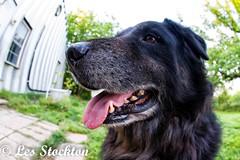 20170509_06555101-Edit.jpg (Les_Stockton) Tags: canine dog pet beggs oklahoma unitedstates us