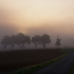 Entre chien et loup (@phr_photo) Tags: mist land landscape paysage lumière light morning matin france gers sudouest