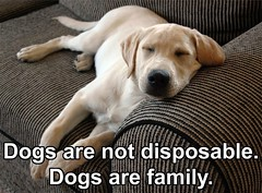Dogs are Not Disposable (dflmanagement) Tags: dog dogs pets quotes animal pet