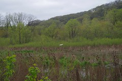 20170430_RushCreek_0109_Edit (holly_bg) Tags: wisconsin wisco wi midwest driftless driftlessregion dog dogs bordercollie bordercollies bluff bluffs swamp bog rushcreek creek river marsh landscape bird birds egret egrets goose geese tree trees forest woods nature naturephotography mushroom mushrooms fungus fungi flower flowers wildflower wildflowers hike hiking outdoors