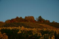 Herbst Abend (ES_789) Tags: herbst oktober fellbach sony a6000 remstal