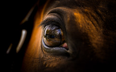 eye-2315-2 (EB_Creation) Tags: macro eye horse horsephotography nikon nikond7100 amateur camera lens looking look sigma sigma170700mmf2840 silhouettes reflection 7dwf