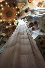 Barcellona (valeriaconti136) Tags: barcellona lasagradafamilia architecture ininterni spagna catalunya cathedral gaudì canoneos550d
