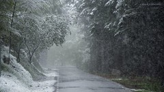 Quiet road... (ChusPS) Tags: nature forest foret catalonia catalunya barcelona unesco road snow spring nikon nikkor color primavera santafedelmontseny