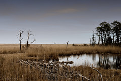 off in the distance (tom bourdot) Tags: april capturenx2 driftwood mirror newjersey nikkor nikond3300 outdoor outside plant reflection refuge rural scenery tangle tattered tidalmarsh tide tombourdot trees wetlands