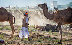 Singer (Padmanabhan Rangarajan) Tags: pushkar bard singing camels cattle fair market