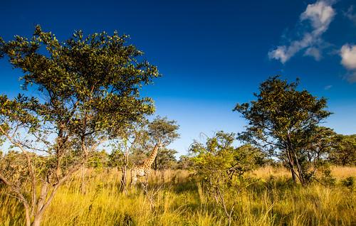KrugerParkREIZ&HIGHRES-102
