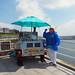sea shore sea shell seller