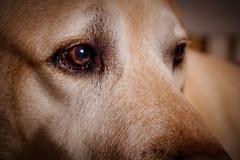 Jim B. (gernot.glaeser) Tags: animals dogs nature pets animal deu 365project nikon project365 jim tiere