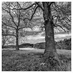 Sauerland in the sunlight #1 (Wayne Interessiert's) Tags: landschaft landscape paydsage sauerland wolken clouds nuages himmel sky ciel monochrome bw blackwhite noirblancphoto baum bäume trees arbres weide prairie saule wald forest for´èt