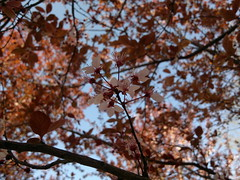 2017-03-28-7779 (vale 83) Tags: blossom nokia n8 friends macrodreams beautifulexpression autofocus