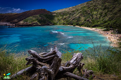 Hanauma bay (Surya Laveti) Tags: oahu hawaii ocean sea beach h hanaumabay oahuconsistentlyvotedasthenumber1beachintheworldamazingforsnorkellingandtoseemarinelife sand snorkelling