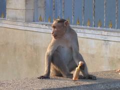 CHAMUNDI HILL MYSORE Photography by CHINMAYA M.RAO on  December 5, 2006 (115)