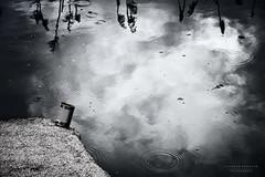 e  q  u  i  l  i  b  r  i  u  m (swaily ◘ Claudio Parente) Tags: monocromatico monocrome acqua riflessi claudioparente nikon d500 nikond500