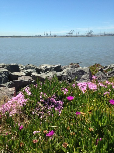 Spring by the Working Bay.