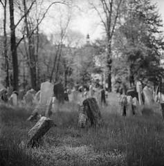 (Paysage du temps) Tags: 2017 20170504 film ilford panf50 rolleiflex zeissplanar80mm cimetière cemetery vieux old juif jew tombes graves prague praha tchéquie république tchèque josefov staremesto