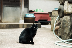 neko-neko1730 (kuro-gin) Tags: cat cats animal japan snap street straycat 猫