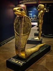 Gold figurine of a serpent deity New Kingdom 18th Dynasty 1332-1323 BCE (mharrsch) Tags: figure figurine sculpture statue serpent deity cobra tutankhamun burial tomb funerary 18thdynasty newkingdom egypt 14thcenturybce ancient discoveryofkingtut exhibit newyork mharrsch premierexhibits gold religiion worship