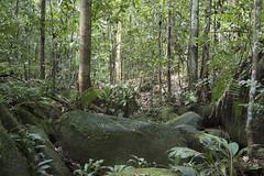 Colombia. (richard.mcmanus.) Tags: colombia southamerica rainforest landscape mcmanus mitu vaupes gettyimages