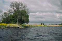 Fresh (rvroel) Tags: trees yellow flowers dock willow water nature clouds landscape