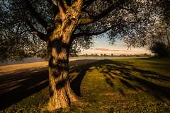 Kerkdriel III (bjdewagenaar) Tags: tree nature landscape landscapephotography water sky shadow light wideangle sony sonya58 sonyalpha sigma 1020mm 10mm shadowplay contrast colors raw photoshop lightroom holland dutch kerkdriel